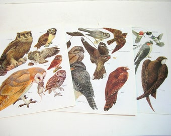 Book Page Prints, Birds, Hummingbird, Swift, Owl, Three Ready To Frame Prints
