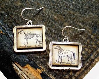 Anatomical Horse Earrings - Horse Skeleton Earrings in Silver