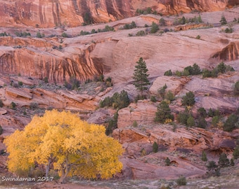 Canyon County Autumn – Cottonwood and Red Rock