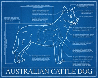 Australian Cattle Dog Blueprint Elevation / Australian Cattle Dog Art / Australian Cattle Dog Wall Art / Australian Cattle Dog Gift