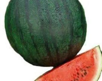 Watermelon seed-Sugar Baby-early season