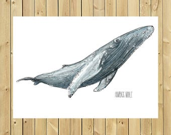 Illustration whale Humpback, size of sheet A3, A4 or A5, Humpback whale
