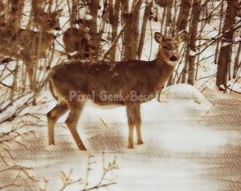 Deer Wildlife Photo, Deer Print, Deer Picture, Deer Photo, Deer Gift, Deer Girl Nursey, Deer Wall Art, Deer Download, Deer Digital, Woodland