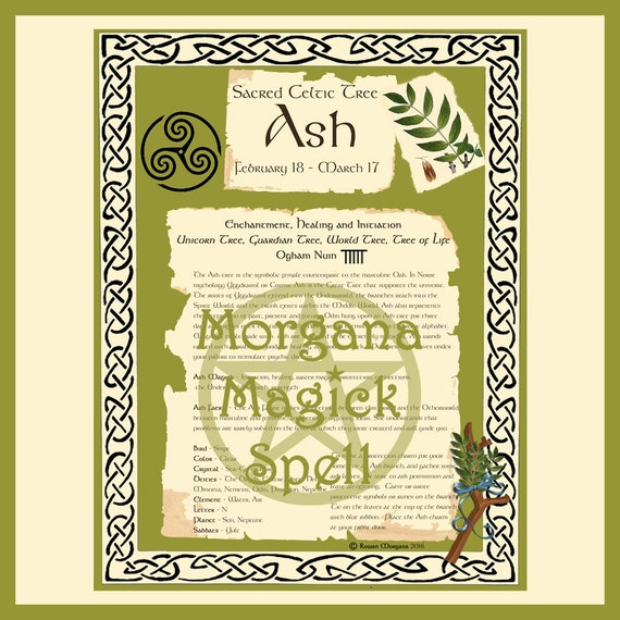 Ash Sacred Celtic Tree