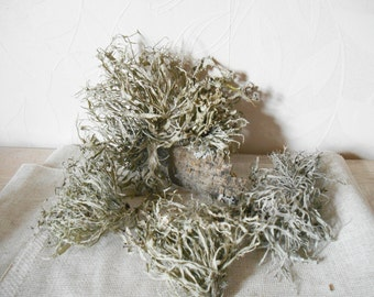 Dried lichen, grey lichen, natural supplies, terrarium supplies, rustic supplies, dried moss, grey moss