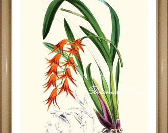 "Orchid Print #4. Orange flower print. Botanical Print. 5x7"", 8x10"" 11x14"""