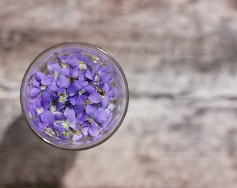 Violet Wine Fine Art Photography Shabby Chic Purple Lavender Grey Flower Circle Minimalist Spring Cottage Home Decor Wall Art