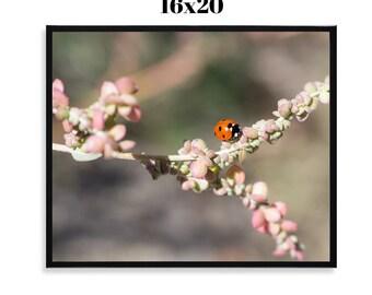 SALE Ladybug - Framed 16x20 Print, Fine Art Photograph, Botanical, Insect, Wildlife, Nature, Spring, Summer