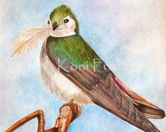 Bird watercolor painting / Violet Green Swallow