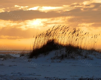 Beach Landscape Photograph // Beach Sunset // Seagrass and Sand Dunes Photograph Print