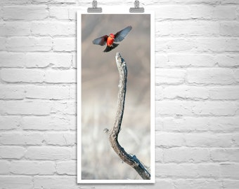 Vermilion Flycatcher, Bird Artwork, Vertical Artwork, Red Bird, Gift for Bird Lovers, Bird Photography, Elegant Art, Canvas Art Print