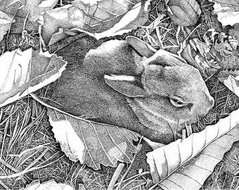 Carol's Bunny