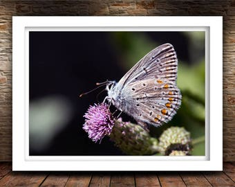 Butterfly Photography, Nature Photography, Flowers Art, Home Decor, Fine Art Photography Print, Butterfly On Flower