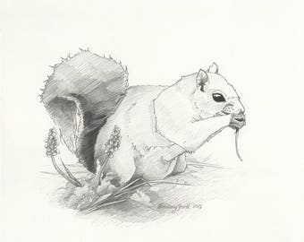 Squirrel - 8x10in. Original Graphite Drawing