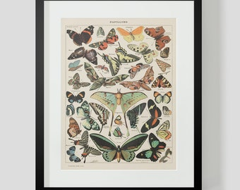 Vintage French Print of Butterflies