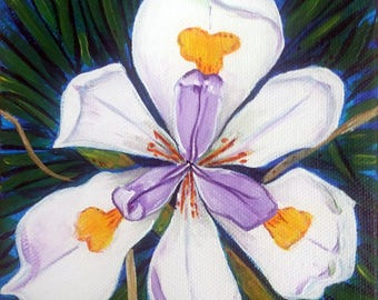 African Iris (butterfly lily, fortnight lily, acrylic painting, decor, bridal gift, floral, flower, nature, spring, easter)