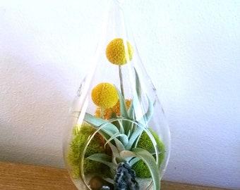 "Large 8.5"" Air Plant Terrarium Kit Hanging Terrarium Crystal Geode Tiger Eye New Home Gift Birthday Gift"