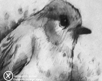 Original ROBIN REDBREAST … Pencil Graphite SKETCH