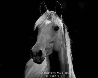 Horse, Horse Pictures, Pictures of Horses, Black and White, Photography, Equine Art
