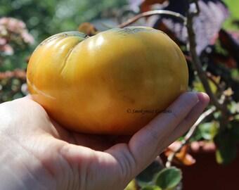 Heirloom Tomato Seeds Kentucky Pineapple - 20 seeds