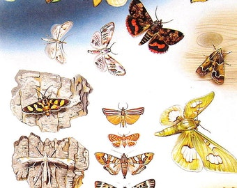 Butterflies - Adults and Larva, Wax Moth, Plume Moth-  1985 Butterfly Book Page - World Butterflies Book - 12 x 8