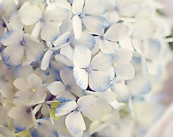 Dreamy Botanical Print, Hydrangea, Flower Photography, Romantic Pastel, Nature - Print
