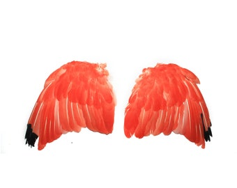 Real scarlet ibis wings 1 / taxidermy / stuffed / tropical bird / curiosity / feathers