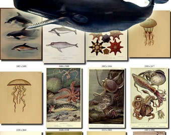 SEA ANIMALS-7 Collection of 140 vintage images Whale Thorburn Dolphin pictures High resolution marine octopus digital download printable