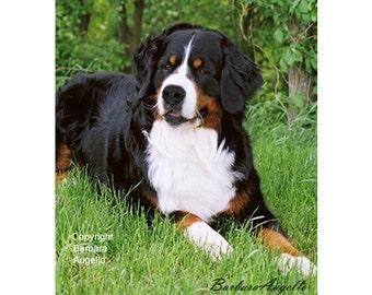 Bernese Mountain Dog Flag, Bernese Mountain Dog Gift, Bernese Mountain Dog Art, Bernese Mountain Dog