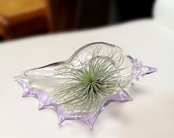 Air Plant Terrarium , Planter , Air Plant Vase , Clear Glass Seashell with Lavender