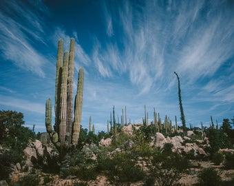 Baja, Mexico Desert