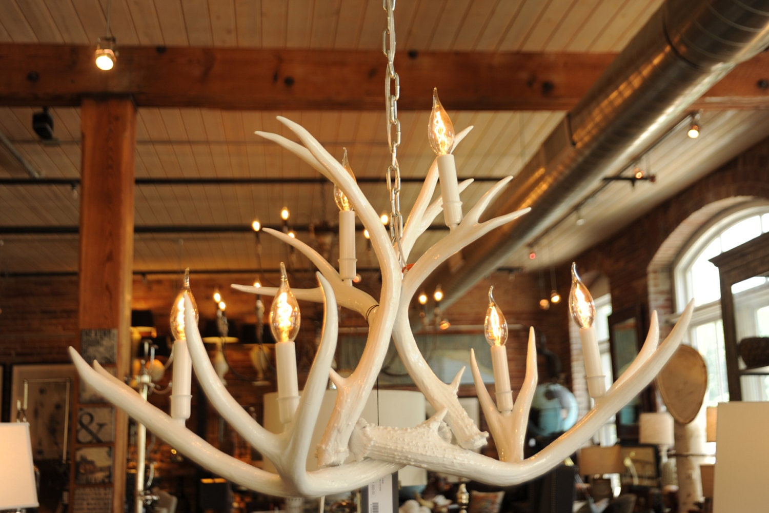White real antler chandelier modern mule deer high gloss zoom mozeypictures Gallery