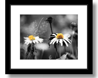 Daisies field,  Nature, Daisy, Flowers, Nature Photograph