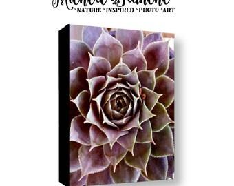 Purple Succulent Gallery Wrapped Canvas, Purple Sedum Photo Canvas, Sedum Photography Canvas, Botanical Sedum Canvas, Nature Photo Sedum Art