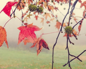Tree Photograph - Autumn Photograph - Nature Photography - Fall Color - Green Red Orange - Ohio - Fog Dreamy Photography - Nature Print