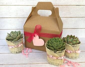 Garden in a Box-Spring Succulent Gift Box-Plant Box-Gardener Gift-Succulent Gift-Thank You Gift-Teacher Appreciation Gift-Gift for Her