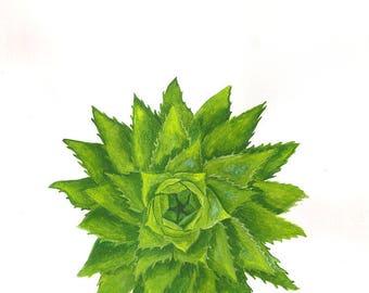 ALOE - Original Watercolor - Flower Painting - 30 x 21,5 cm / 11.8 x 8.5 inch