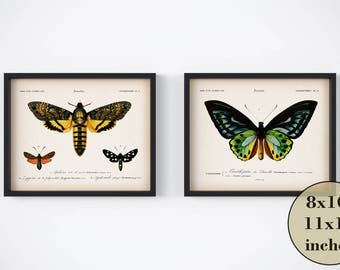 Insect scientific illustration, Instant download, Vintage insect print set, Printable art, Set of 2 wall art, Butterfly print, Moth print
