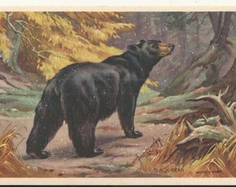 1939 Artist Signed, Walter A. Weber, American Wildlife Resources subject # 4 Postcard- Black Bear  - Free Shipping