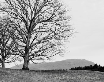 Mountain Tree Photography, Black & White Home Decor, winter landscape photos, tree print art,  minimalist wall art, rustic home decor