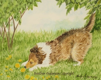 "Shetland Sheepdog sable Pup, ""Dandy and the Lions"",  original 8 x 10 painting,  watercolor, Heather Anderson dog artist"