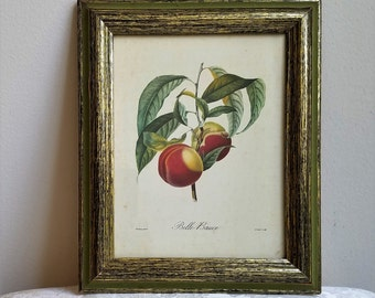 """Vintage Botanical Fruit Peaches Wall Art Print in Wood Frame """"Belle Bauce"""" by Academy Arts"""