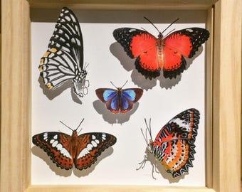 Butterfly Box - Indian & Bhutan tropical butterflies | Like-real in 15cm x 15cm shadow box
