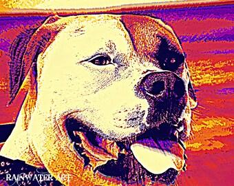 Dog Dayz Of Summer By C Rainwater