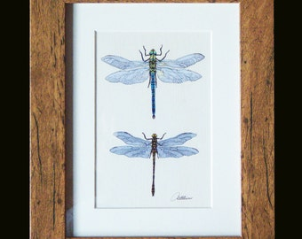 Dragonfly Picture,Dragonfly Print,Dragonfly Wall Decor. 'Dragonflies on Canvas'  in Oak look frame. A Print of the original painting framed