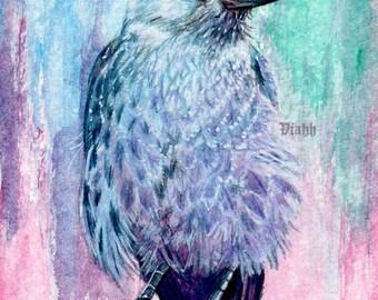 """1 x blank Jackdaw crow postcard """"Naakka"""""""