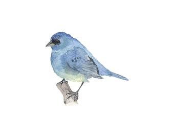 Blue Bird on a Branch - Fine Art Print