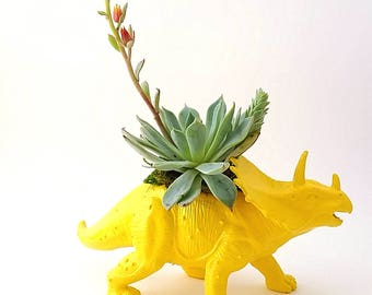 Triceratops Dinosaur Planter + Succulent \\ Dinosaur Planter \\ Desk Accessory \\ Dorm \\ Home Decor \\  Gift \\ Office Decor \\ Desk Plant