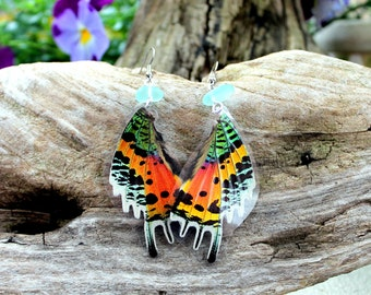 Madagascan Sunset Moth Earrings, Real Moth Earrings, Rainbow Moth Earrings