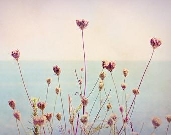 Queen Annes by the Sea, Coastal, Beach flowers, Queen Annes Lace, Shore